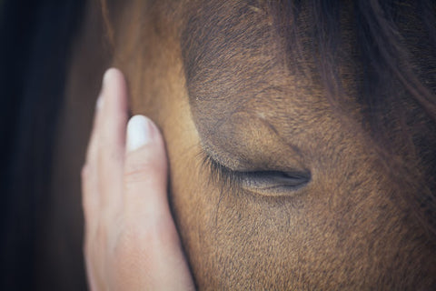 Thankfully, there are healthy ways for owners to treat horses that have been affected by Equine Summer Itch.