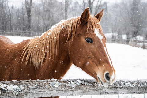 Horse by fence in the snow