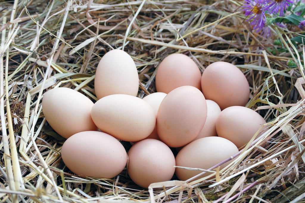 Farm Fresh Free Range Eggs