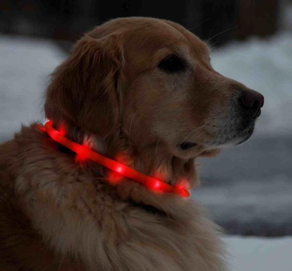 LED Light Collars For Dogs, 70  cm Adjustable  - Red