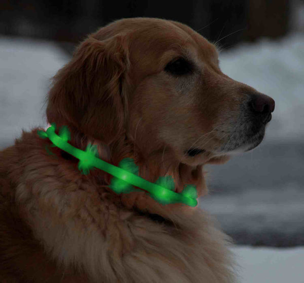 LED Light Colour Collar for Dogs - Rechargeable USB 70 cm- Green