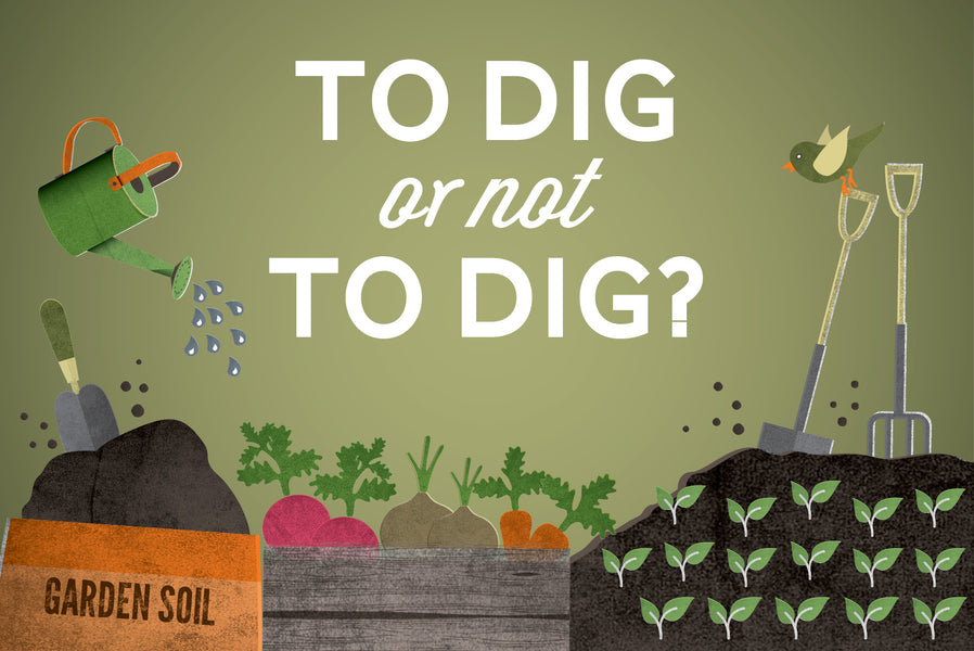 Is the traditional method of digging over our soil now outdated? We've weighed up the pros and cons for both methods
