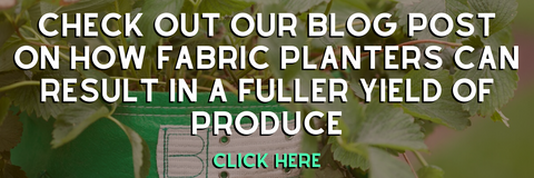 CHECK OUT OUR BLOG POST ON HOW FABRIC PLANTERS CAN RESULT IN A FULLER YIELD OF PRODUCE