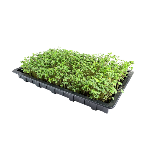 Nutley's Full Size Shallow Seed Trays