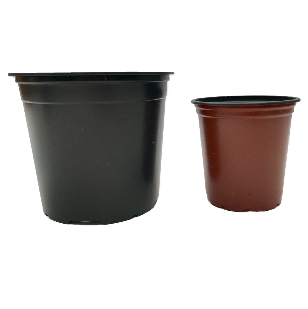 Mixed 9cm and 13cm Round Modiform Plastic Pots Duo