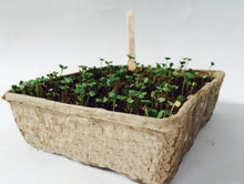 Load image into Gallery viewer, Nutley's biodegradable seed trays half size recyclable greenhouse compostable mushroom tray