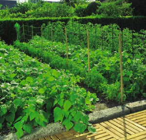 Nutley's 2m wide Green Trellinet Pea Bean Tomato Netting support vegetables various lengths