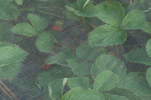 Extra Fine Insect Netting 0.23mm Mesh Keeps out Aphids, Black and Whitefly 5m x 2m