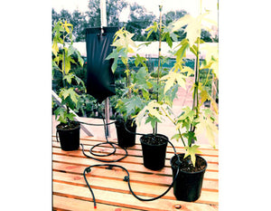 Garland Big Drippa Greenhouse Plant Watering Kit with Adjustable Nozzles