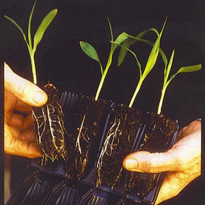 Deep Books for Root Trainers (Pack of 8)