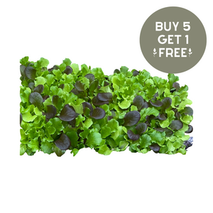 Nutley's Mixed Babyleaf Lettuce Seeds