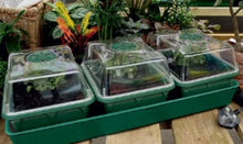 Load image into Gallery viewer, Nutley's electric heated propagator windowsill self-watering MPL seeds cuttings