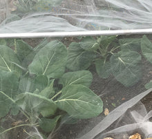 Load image into Gallery viewer, 	2m wide Insect Netting protect against root fly cabbage white various lengths
