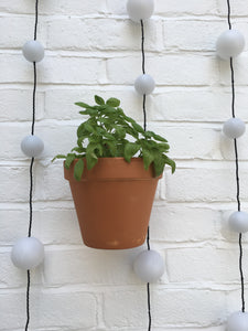 Nutley's hidden hanging wall bracket for pots herbs flowers vertical plants