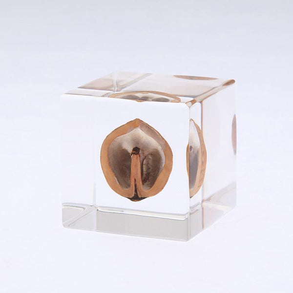 Sola Cube, Japanese Walnut