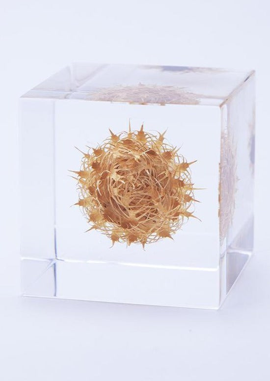 Sola Cube, Basket Flower
