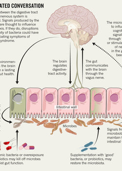 What does the vagus nerve have to do with my health?