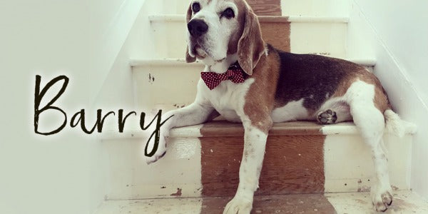 Custom Memorial Jewellery To Remember Barry The Beagle