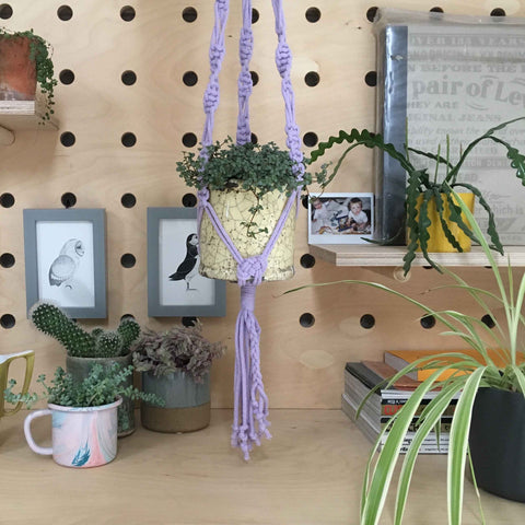Macrame plant hanger and houseplants on peg board in bedroom