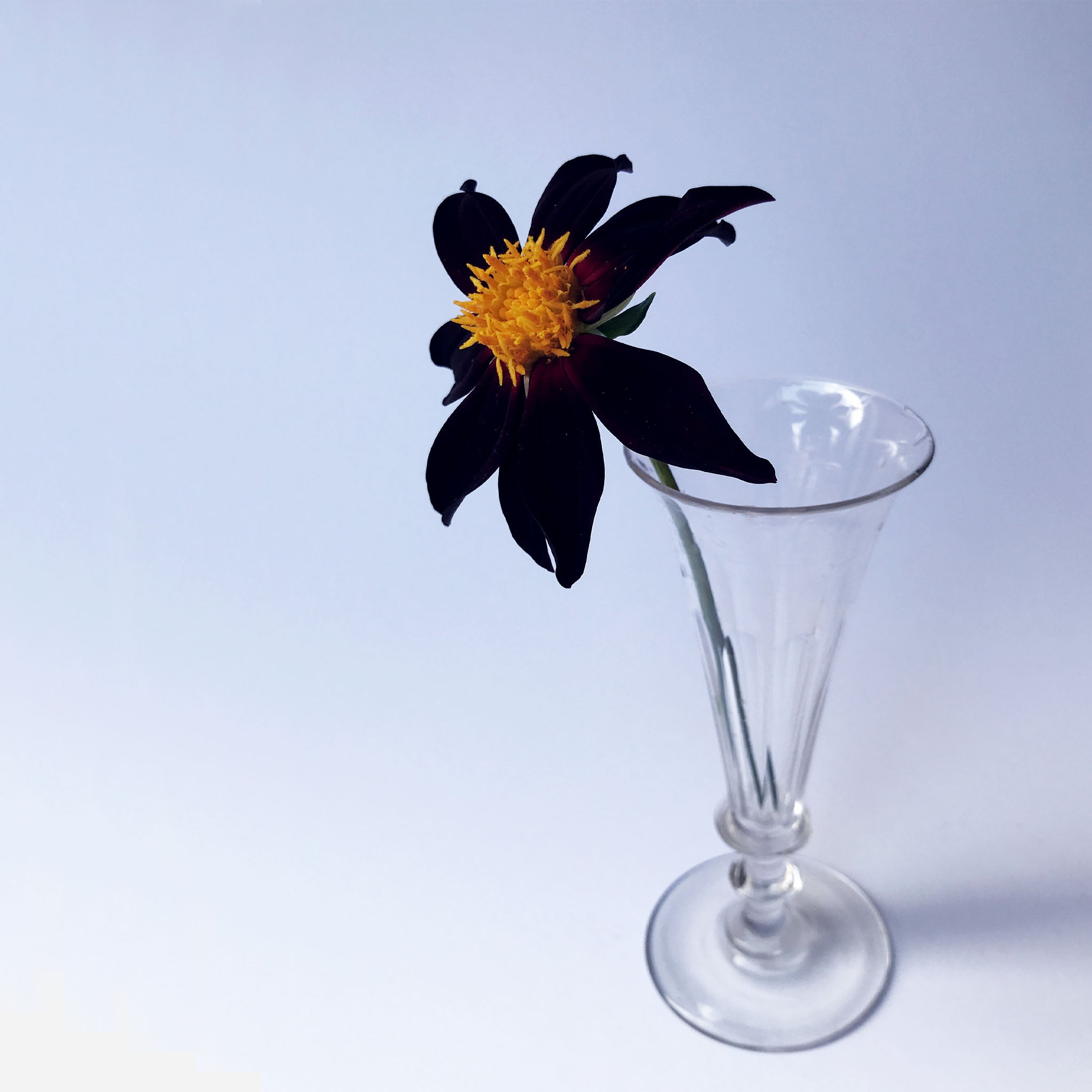 Glass Stem Vase - White Space Home