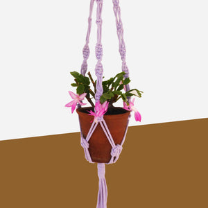 Lilac Recycled Yarn Macrame Plant Hanger - White Space Home