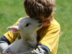 Young blond boy in a yellow shirt, sitting on green grass, snuggling a small white lamb