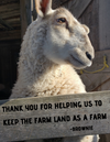 "White sheep with brown spots on face, leaning up against a barn board that reads ""thank you for helping us to keep the farm land as a farm"""