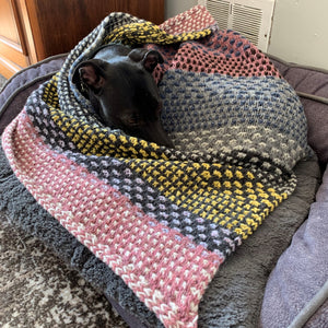 Small black dog curled up in a multi-coloured knitted shawl