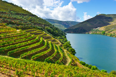 Around the World of Wine - Portugal