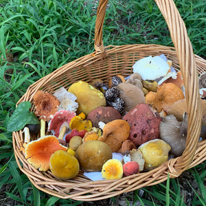The Culture Of Medicinal Mushrooms - MAY 23-24, 2020