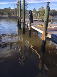 Fishing Tip of the Day - Docks and Bridges