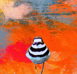 'Orange Killdeer' Canvas Reproduction by Lori Franklin