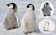 Load image into Gallery viewer, Penguin Gift Pack Adoption