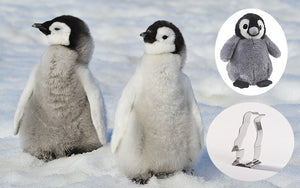 Penguin Gift Pack Adoption