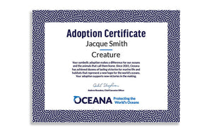 Blue Whale Plush Adoption Certificate