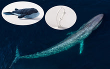 Load image into Gallery viewer, Blue Whale Adoption Gift Pack