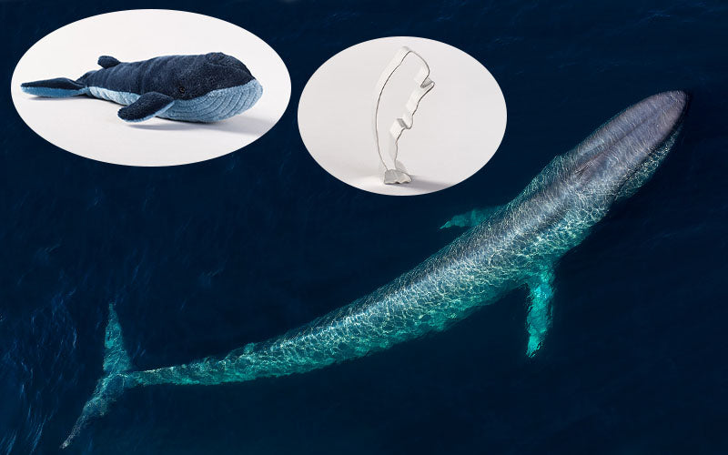 Blue Whale Adoption Gift Pack