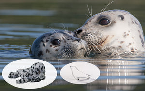 Harbor Seal Adoption Gift Pack