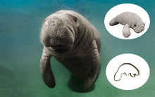 Load image into Gallery viewer, Manatee Adoption Gift Pack