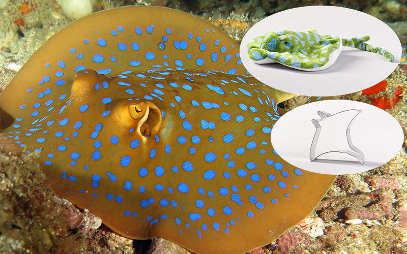 Bluespotted Ribbontail Ray Adoption Gift Pack