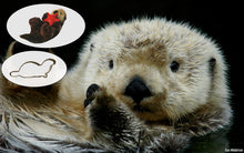 Load image into Gallery viewer, Sea Otter Adoption Gift Pack