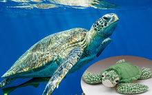 Load image into Gallery viewer, Limited Edition Sea Turtle Casey Kit