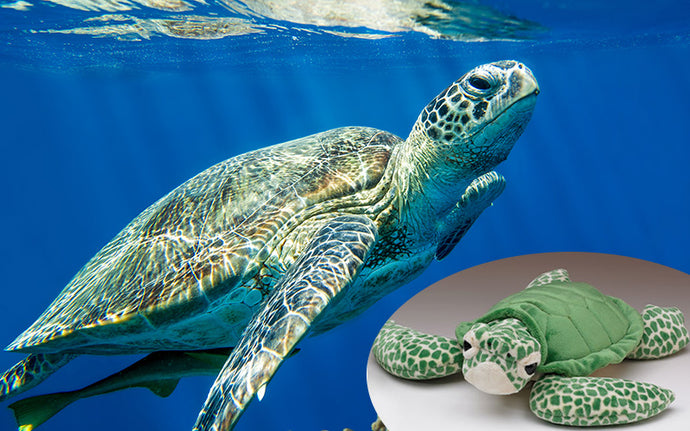Limited Edition Sea Turtle Casey Kit