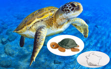 Load image into Gallery viewer, Sea Turtle Adoption Gift Pack
