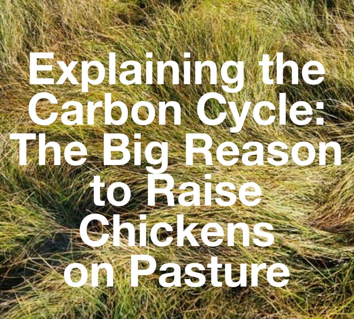 Explaining The Carbon Cycle: The Big Reason to Raise Chickens on Pasture