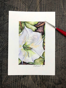 Jimsonweed Bloom Original Watercolor Painting of White Flower with Green Leaves