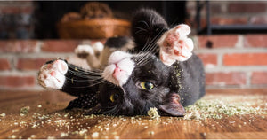 "A Photographer Takes Pictures of Cats ""High"" on Catnip, and It'll Be Your New Favorite Thing"