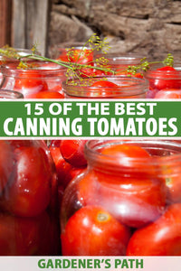 What do home gardeners do when the going gets tough? If you're like me, your thoughts turn to growing foods for stocking up, and canning tomatoes are top of the list.