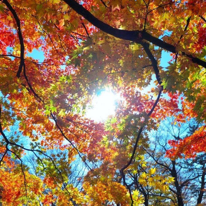 Fall Equinox- Fall Cleansing!