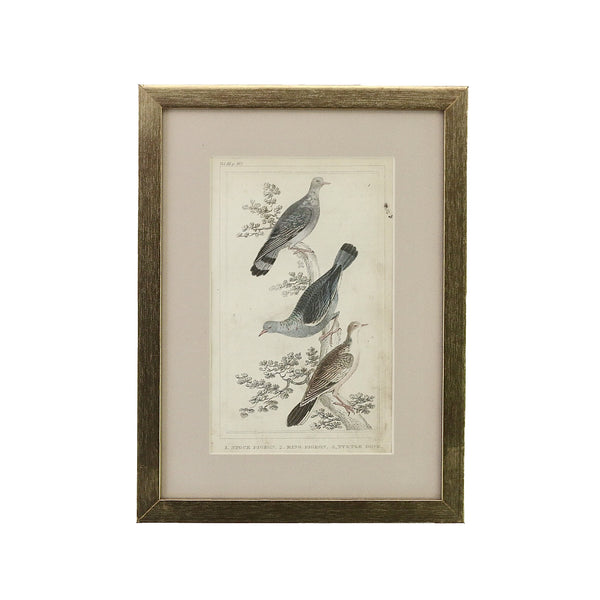 Antique Hand Coloured Engraving of Two Pigeons and a Turtle Dove. We discovered this very pretty and original antique hand coloured steel engraving at a small antiques dealer in England. Dated from 1840 it depicts a stock pigeon, ring pigeon and a turtle dove. The light, dusty pink mount emphasises the subtle colours of the birds.